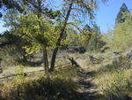 This trail makes a nice day hike or longer backpacking trip.